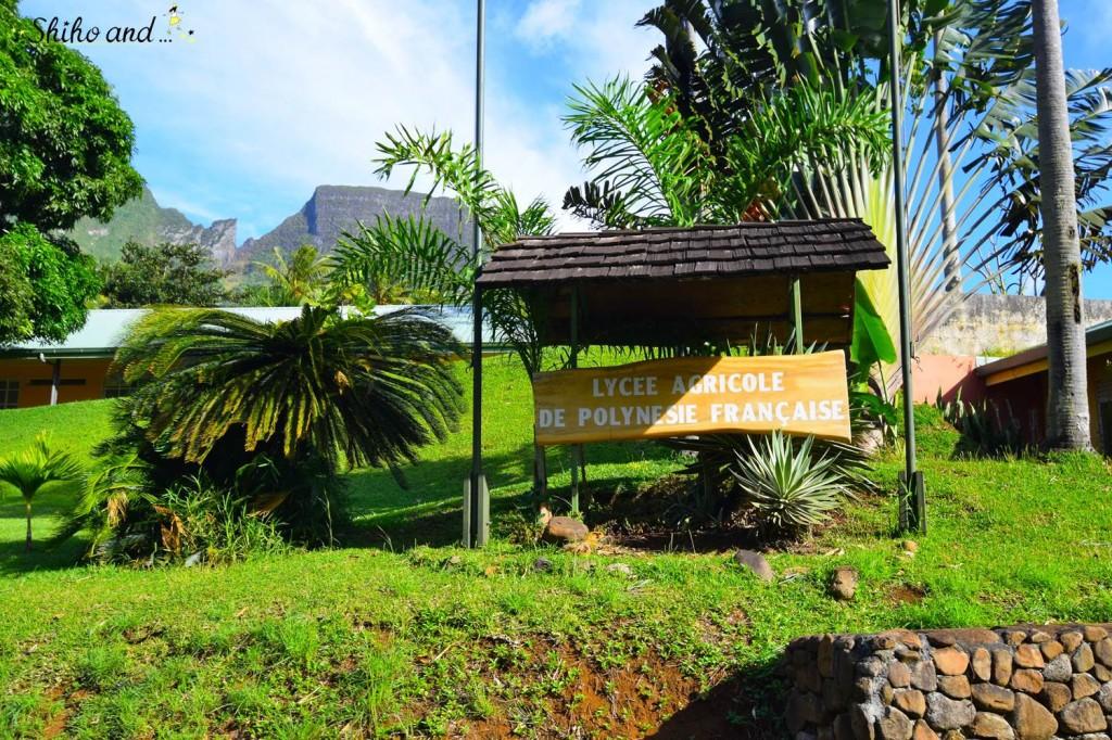 Tahiti1-41