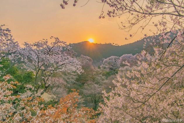 吉野山_yoshino_桜