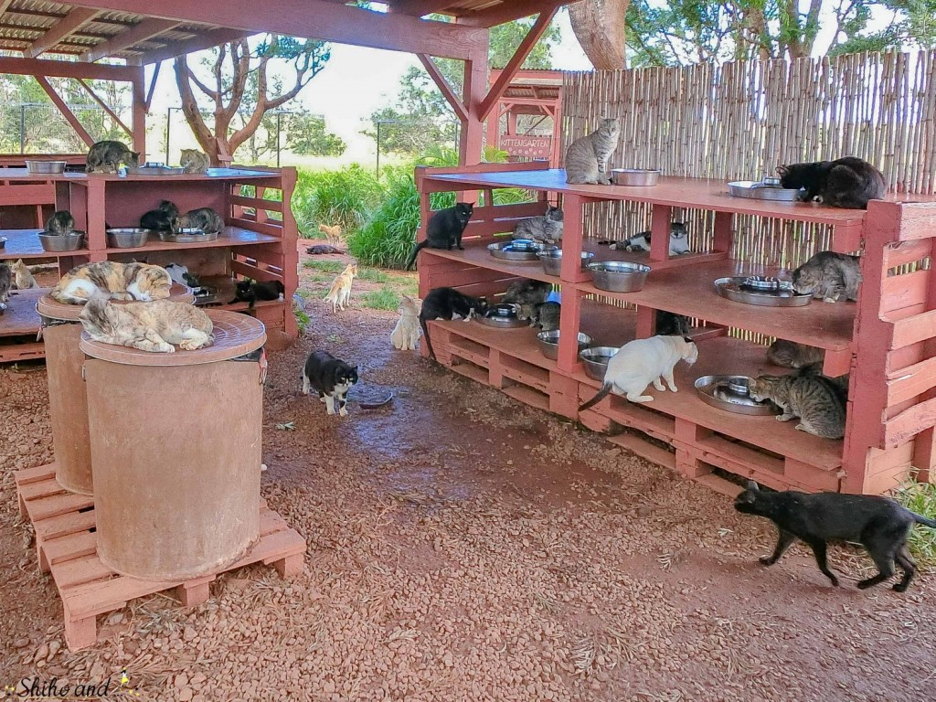 Hawaii_Lanai_CAT_06