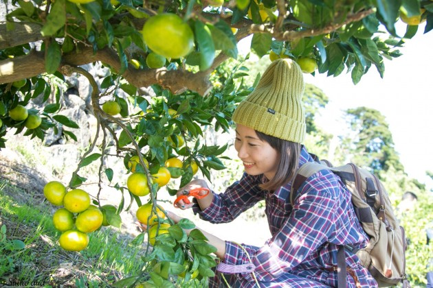 higashiizu1_orange_08